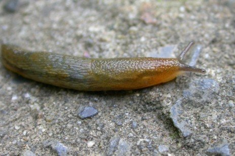 How to Control Slugs