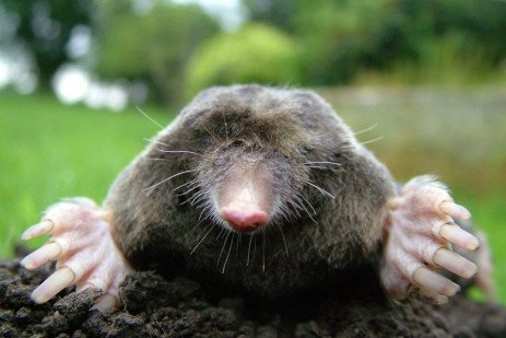 Identifying Moles, Voles and Shrews