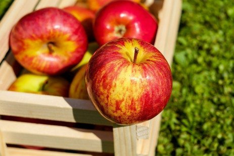 Nutritional Requirements of Apples in Home Fruit Plantings