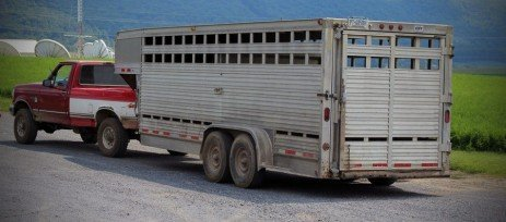 Are You Moving Cattle Across State Lines?
