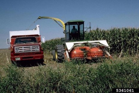 Diagnostic des Troubles de L'ensilage