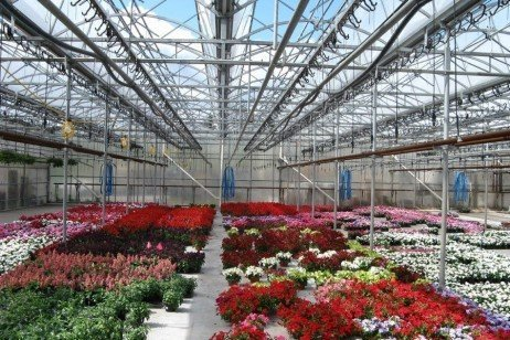 Things a Greenhouse Grower Can Do To Improve Energy Efficiency