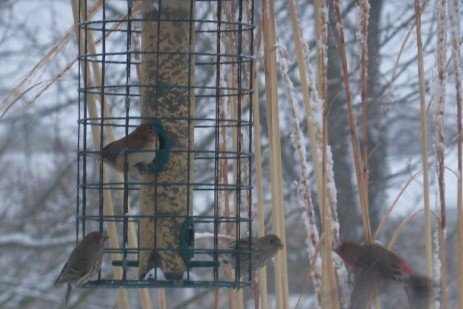 Caring for Birds in the Winter