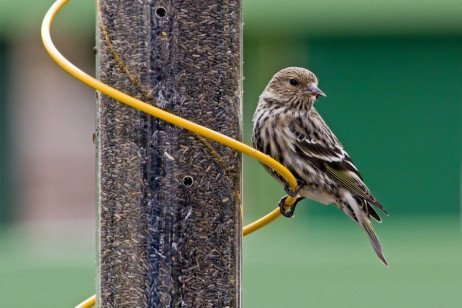 Winter Bird Feeding: The Basics