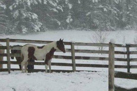 Winter Care for Your Horse