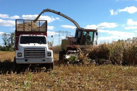 Growing Corn and Corn Silage on a Budget