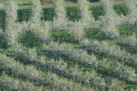 Stone Fruit Insect and Mite Control Toolbox - Insecticide and Miticide Timing