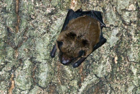 Increasing Bat Populations