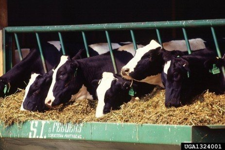 Trouble-shooting Infertility Problems in Cattle