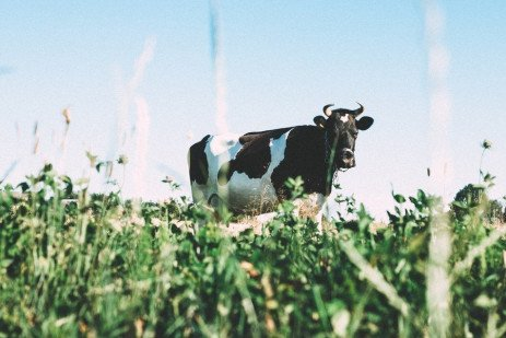Tips For Preventing Pasture Bloat