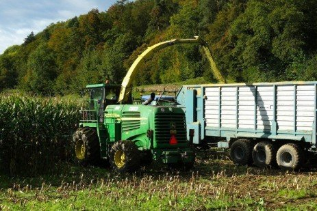 Considerations in Managing Cutting Height of Corn Silage