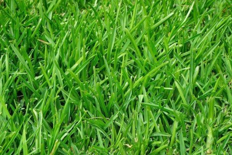 The Cool-Season Turfgrasses: Basic Structures, Growth and Development