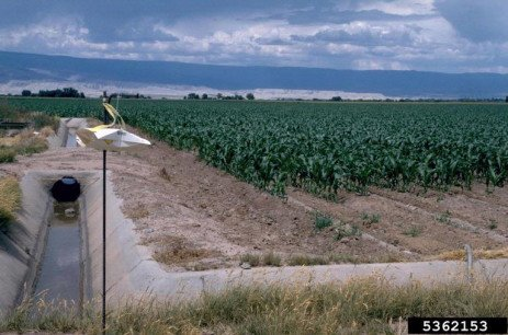 Instructions for Using Pheromone-Baited Traps for European Corn Borer