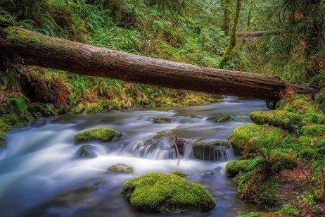 Forest Stewardship: Watershed Management