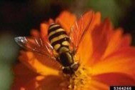 Beneficial Insects Can Help the Garden Flourish