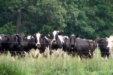 Supplementing Pasture with a Total Mixed Ration