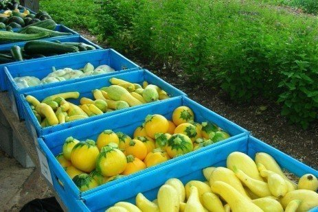 Keep Fresh Produce Safe Using Good Agricultural Practices (GAPs)