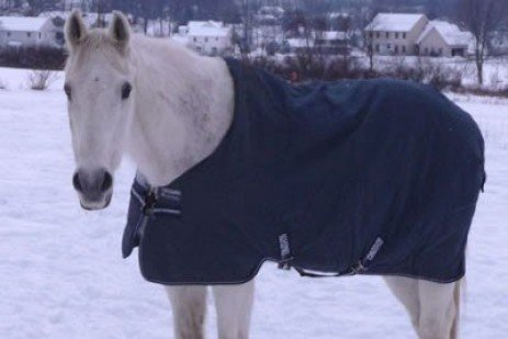 When to Blanket a Horse
