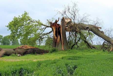 Tree Diseases that Create Hazards