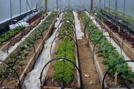 Extending the Garden Season with High Tunnels