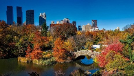 Working with Local Government for Successful Urban Forests