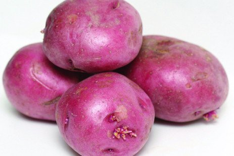 Fertility Considerations for Potatoes