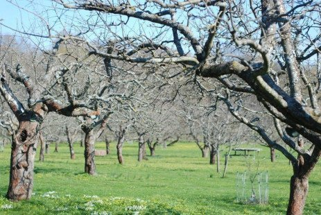 Home Orchards: The Planting Site