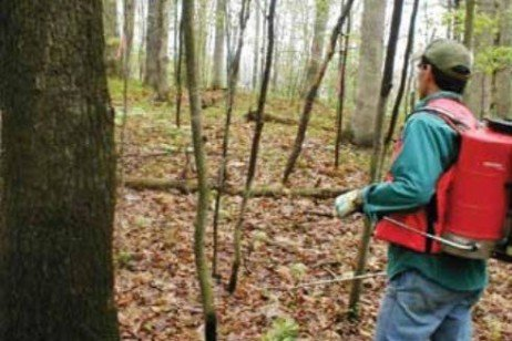 Using Basal Bark Herbicide Applications to Control Understory Tree Species