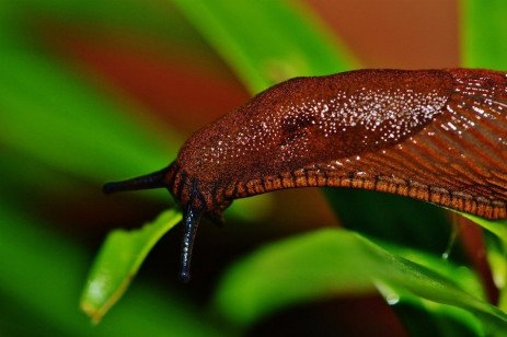 Slugs and Their Control