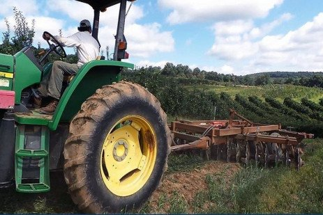Planting Sorghum Sudangrass Following Orchard Removal