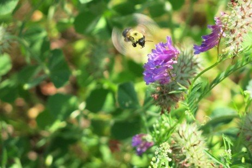 Pesticides and Pollinators