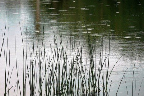 Pond Agencies and Permits in Pennsylvania