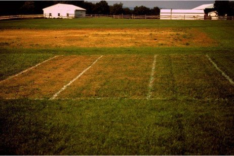 The Impact of Mowing on Weed Pressure