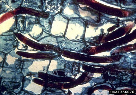 Activity - Invisible Allies: Beneficial Nematodes