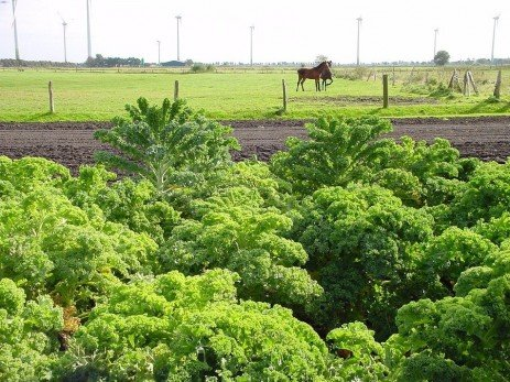 Need Forage? Try Annual Crops