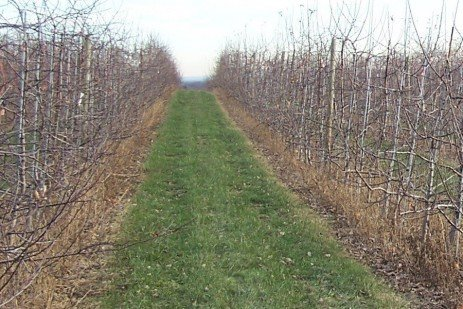 Orchard Weed Control - Fall Herbicide Applications