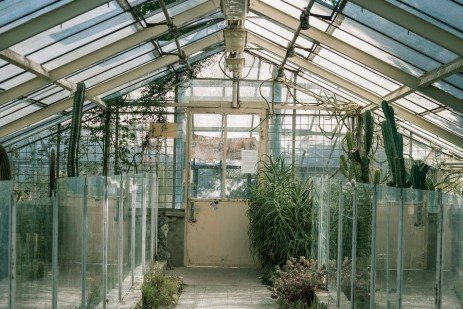 Biological Control Of Plant Diseases (Greenhouse)