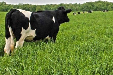 Pasturing Dry Cows and Heifers