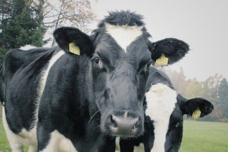 Pasture, Body Condition, and Reproduction