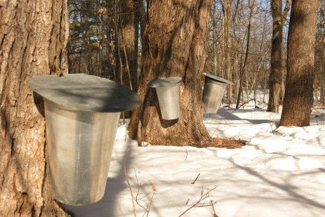 Maple Syrup Terminology