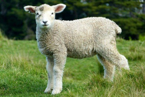What if Lambs Were Priced on a Grid?