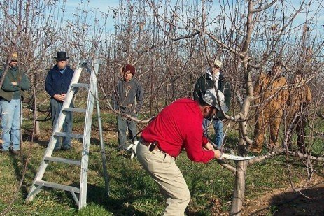 Orchard Pruning - Safety Tips