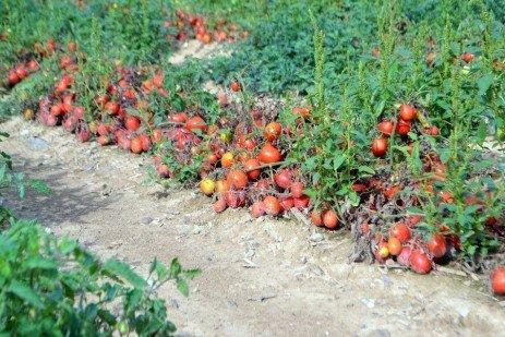 On the Road—Furmano's Tomato Processing Plant