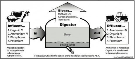 Fate of Nutrients and Pathogens During Anaerobic Digestion of Dairy Manure