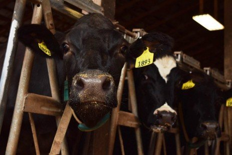 A Long-Term Mindset for Reproductive Management