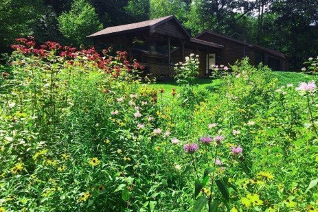 Neighborly Natural Landscaping in Residential Areas