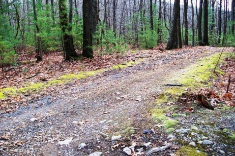 Maintain Forest Roads to Prevent Erosion and Protect Water
