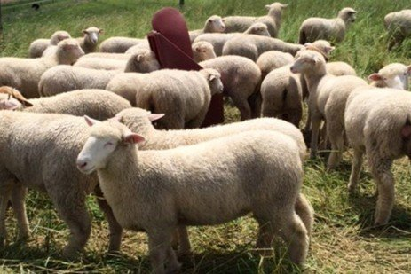 Using EBV Data to Promote Parasite Resistance