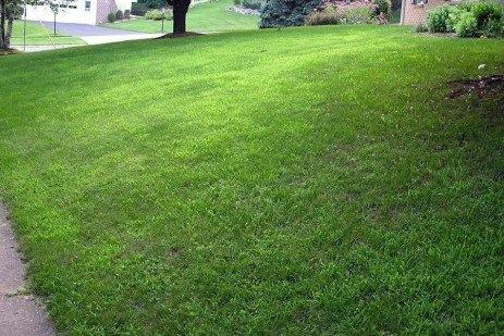 Postemergence Control of Crabgrass and Other Summer Annual Grasses in Lawns