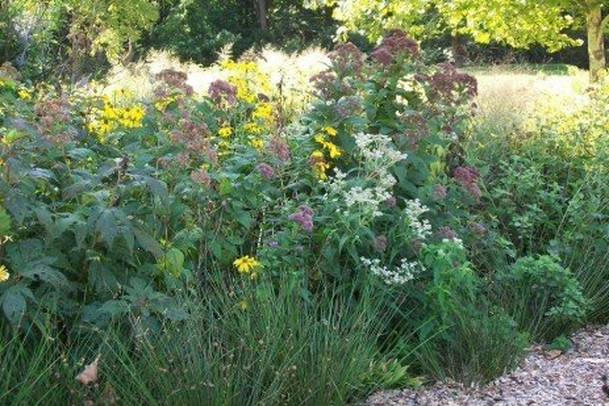 Rain Gardens - the Plants